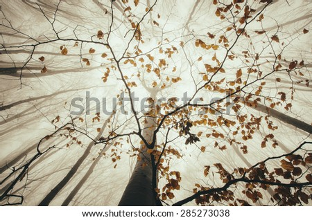 upward view in forest with autumn leaves on tree - stock photo