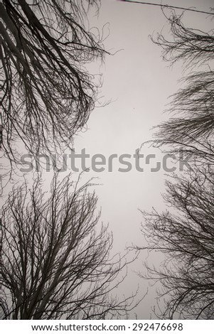 Upward view of bare naked  trees with many branches.