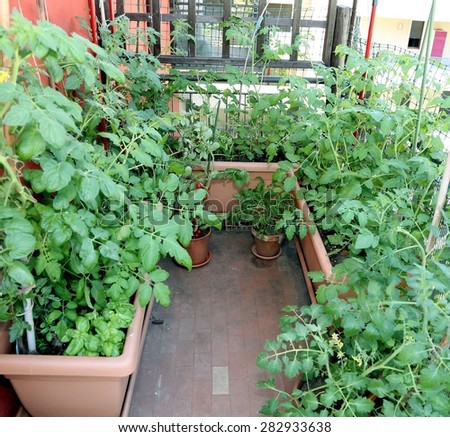 urban garden in the terrace of the home in the city - stock photo