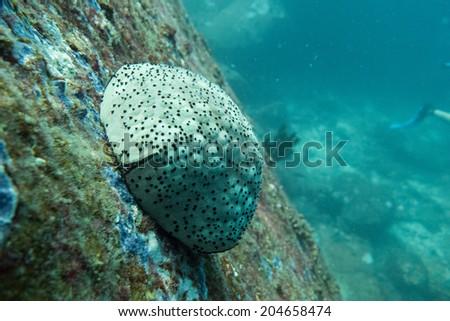 Urchin - stock photo