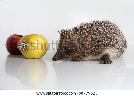 Urchin and apples - stock photo