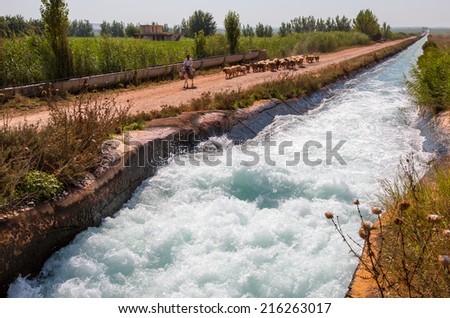 URFA - TURKEY - SEPTEMBER 06: A shepherd on a donkey leads his sheep down a road to pasture near water canal, September 06, 2014 in Urfa , Turkey