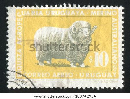 URUGUAY - CIRCA 1967: stamp printed by Uruguay, shows Corriedale Ram, circa 1967 - stock photo