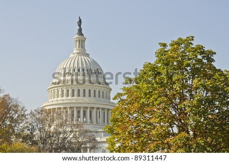 US Capitol Building with tree and blue sky, Washington DC, USA