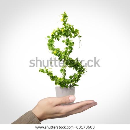 us dollar growing concept - stock photo