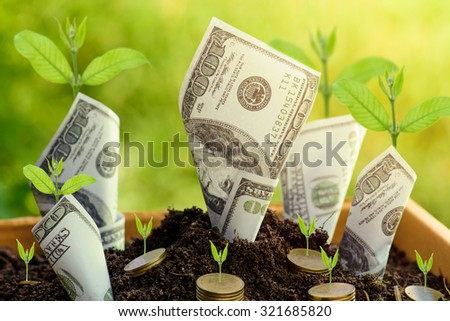 Us dollars and gold coin with plant grow from the ground Box ; investment concept - stock photo