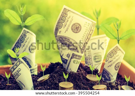 Us dollars and gold coin with plant grow from the ground Box ; investment concept