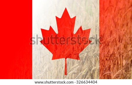 US Flag merged with wheat in full bloom, double exposure shot, concept of earning money from agriculture