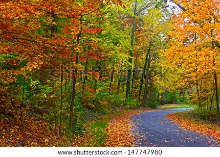 US National Arboretum in the Fall, Washington DC. Road framed by colorful autumn leaves in the dense thicket. - stock photo