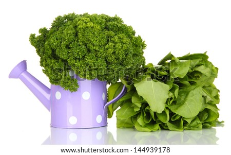 Useful herbs in lilac watering can isolated on white - stock photo