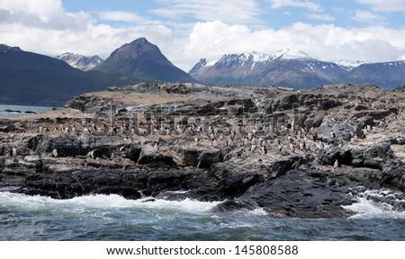 Ushuaia Landscape with Cormorants - stock photo