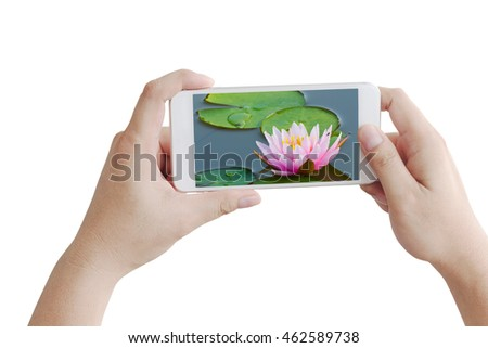 Using smartphone to take photos of beautiful lotus flower