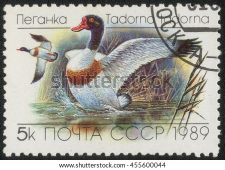 "USSR - CIRCA 1989: A post stamp printed in USSR shows a series of images ""Waterfowl"", circa 1989 - stock photo"