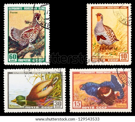 USSR - CIRCA 1961: A set of postage stamps printed in USSR shows birds, series, circa 1961