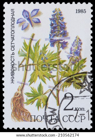 USSR - CIRCA 1985: a stamp from USSR, shows medicinal plant from Siberia larkspur, circa 1985. - stock photo