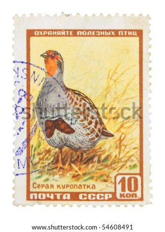USSR - CIRCA 1968: A stamp printed in the USSR showing partridge, circa 1968
