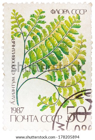 USSR - CIRCA 1987: A stamp printed in the USSR shows Maidenhair, circa 1987. - stock photo