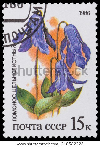 "USSR - CIRCA 1986: A stamp printed in USSR from the ""Plants of Russian Steppes "" -  Clematis, circa 1986 - stock photo"