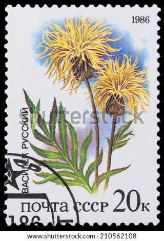 "USSR - CIRCA 1986: A stamp printed in USSR from the ""Plants of Russian Steppes "" -  Russian knapweed, circa 1986 - stock photo"