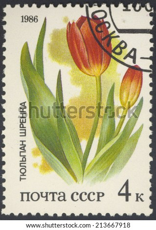 USSR - CIRCA 1986: A stamp printed in USSR from the Plants of Russian Steppes - tulip, circa 1986 - stock photo