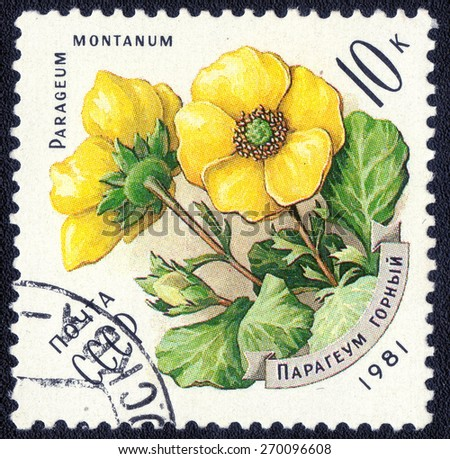 "USSR - CIRCA 1981: A stamp printed in USSR from the ""shows a series of images  ""wildflowers"" , circa 1981   - stock photo"