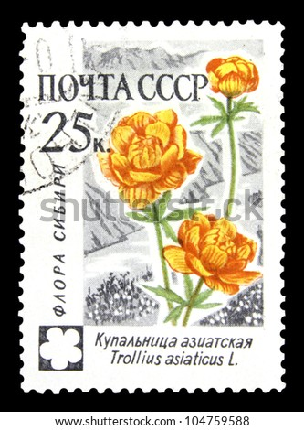 """USSR - CIRCA 1960: A Stamp printed in USSR (Russia) shows a Asian Globeflower with the inscription """"Trollius asiaticus, Flora of Siberia, from the series """"Russian Flowers"""", circa 1960 - stock photo"""