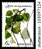 "USSR - CIRCA 1980: A stamp printed in USSR (Russia) shows Common Ash with the inscription ""Fraxinus excelsior"", from the series ""Protected trees and shrubs"", circa 1980 - stock photo"