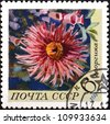 "USSR - CIRCA 1970: A stamp printed in USSR (Russia) shows Flowers with the inscription ""Dahlia"", from the series ""Flowers"", circa 1970 - stock photo"