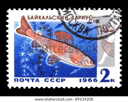 """USSR - CIRCA 1966: A stamp printed in USSR (Russia) shows Grayling with the inscription """"Baikal Grayling (Thymallus arcticus baicalensis)"""" from the series """"Commercial fish of Lake Baikal"""", circa 1966 - stock photo"""