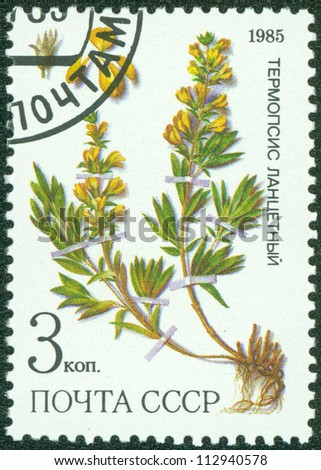"""USSR - CIRCA 1985: A stamp printed in USSR (Russia) shows image of Medicinal plant with the inscription """"Thermopsis lanceolata"""", from the series """"Medicinal plants from Siberia"""", circa 1985 - stock photo"""