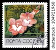 "USSR - CIRCA 1969: A stamp printed in USSR (Russia) shows red gladiolus with the inscription ""Ural Girl (Rus. Uralochka)"", from the series ""Academy of Sciences Botanical Gardens, Moscow"", circa 1969 - stock photo"