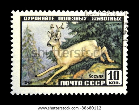 "USSR - CIRCA 1961: A stamp printed in USSR (Russia) shows Siberian Roe Deer with the inscription ""Capreolus pygargus"" from the series ""Animals"", circa 1961"