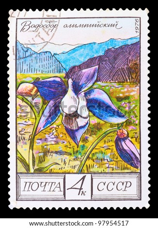 USSR - CIRCA 1976: A stamp printed in USSR shows a Aquilegia olympica, series, circa 1976