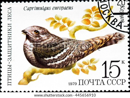 "USSR - CIRCA 1979: A stamp printed in USSR shows a bird Caprimulgus europaeus with the inscription and name of series ""Birds - the defenders of the forest"", circa 1979 - stock photo"