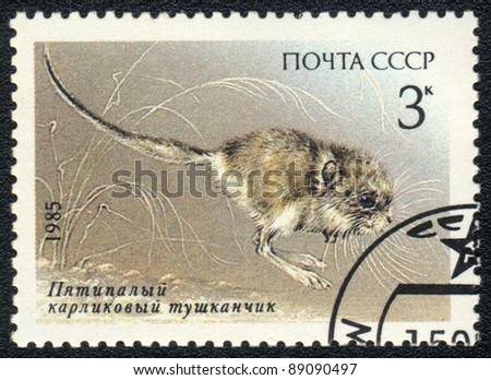 USSR - CIRCA 1985: A stamp printed in USSR shows  a Cardiocranius paradoxus Satunin, series, circa 1985
