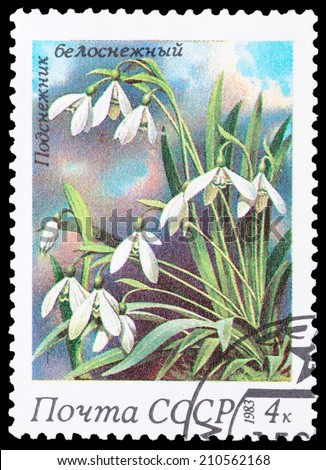 USSR - CIRCA 1983: A stamp printed in USSR,  shows a Snowdrop, from the series Spring Flowers, circa 1983 - stock photo