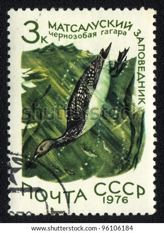 USSR - CIRCA 1976: A stamp printed in USSR  shows Black-throated Loon in Matsalu Nature Reserve, from series National reserve, circa 1976