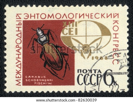 USSR - CIRCA 1968: A Stamp printed in USSR shows image of a carabus schoenherri, circa 1968