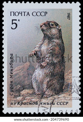 """USSR - CIRCA 1987: A Stamp printed in USSR shows image of a marmot from the series """"Endangered Wildlife"""", circa 1987 - stock photo"""