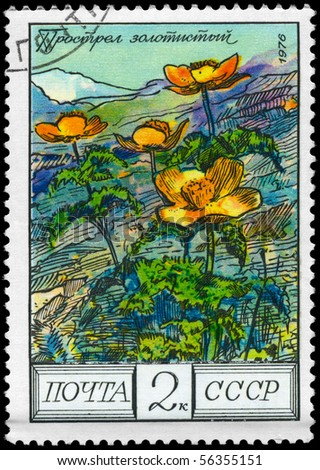 "USSR - CIRCA 1976: A Stamp shows image of a Pasqueflower with the designation ""ulsatilla aurea"", series, circa 1976"