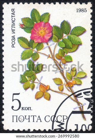 USSR - CIRCA 1985: stamp from the USSR shows image  series   medicinal plants from Siberia series, circa 1985 - stock photo