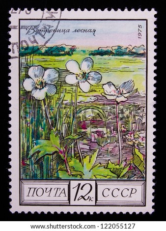USSR - CIRCA 1975: Stamp printed in USSR shows a flowerwood anemone ,circa 1975