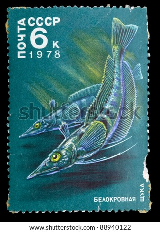 USSR - CIRCA 1978: The post stamp printed in the Soviet Union shows image of a Whiteblooded Pikes, series , circa 1978 - stock photo