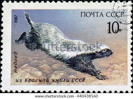 USSR - CIRCA 1987: USSR postage stamp depicting a running badger. A series of postage stamps Red Book of the USSR 1987. - stock photo
