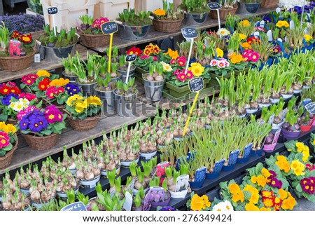 UTRECHT, THE NETHERLANDS - MARCH 06: Market stand selling several fresh Dutch flowers on March 06, 2013 downtown in Utrecht, fourth city of the Netherlands