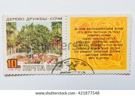 UZHGOROD, UKRAINE - CIRCA MAY, 2016: Postage stamp printed in USSR, shows Friendship Tree, unique citrus tree, Sochi, Russia,  circa 1970 - stock photo