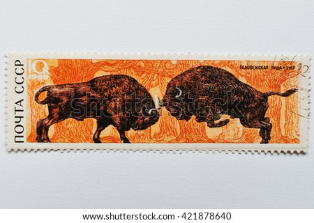 UZHGOROD, UKRAINE - CIRCA MAY, 2016: Postage stamp printed in USSR shows zubr bull bison from Bialowieza Forest or Belovezhskaya Pushcha (Belarus), circa 1969 - stock photo