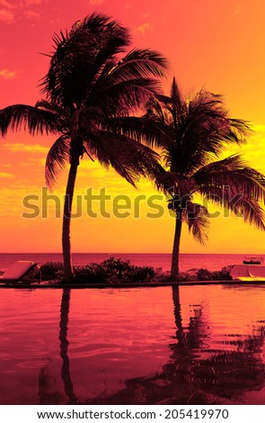 vacation, beach, summer and leisure concept - coconut tree silhouette on the beach, red sunset view - stock photo