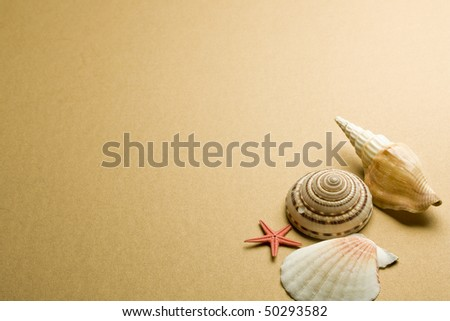 Vacation memories from beach, seashell and starfish - stock photo