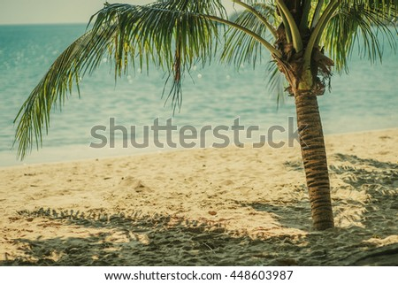 Vacation wallpaper concept. Palm tree and the sunny sea beach.